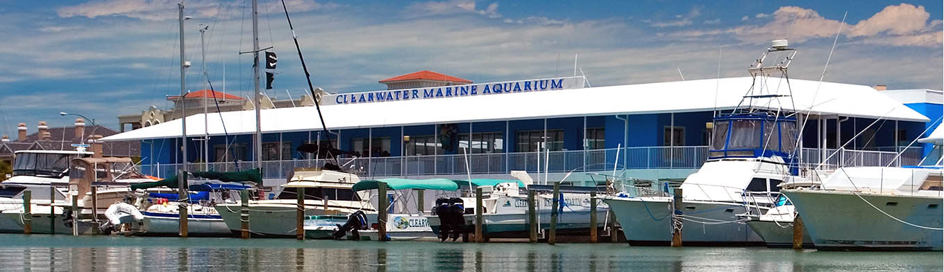 Clearwater Marine